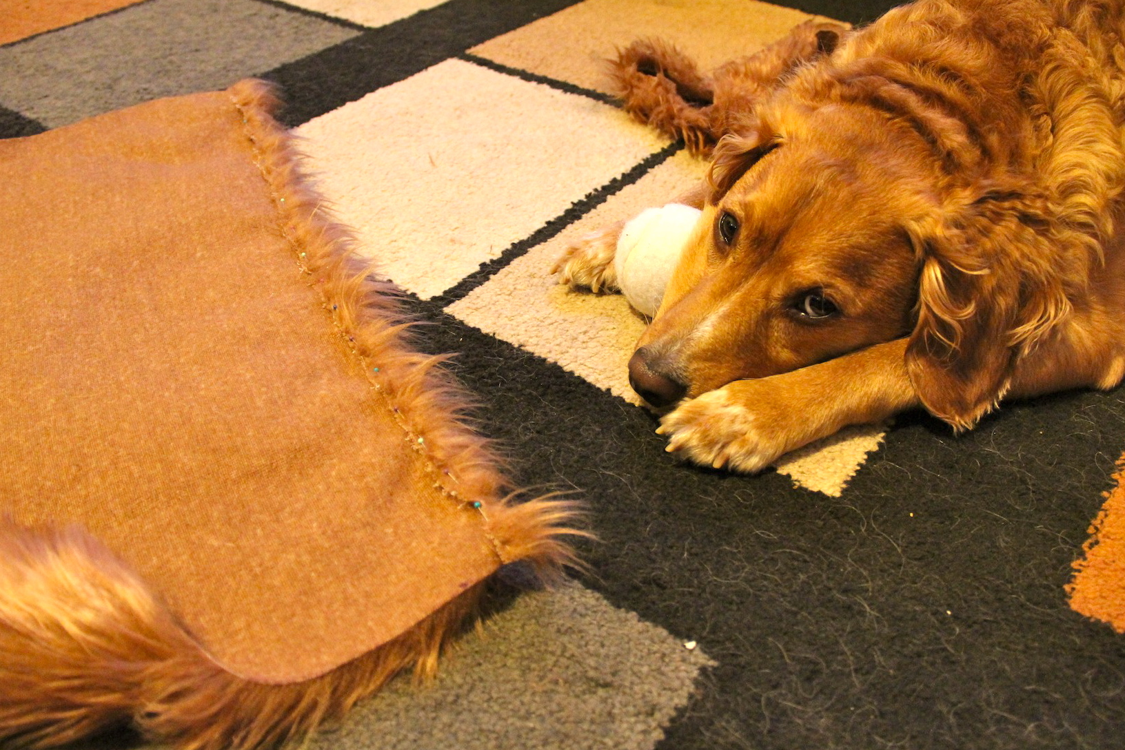 How to make a lions mane dog costume needles and know how then solutioingenieria Gallery