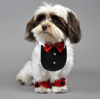 valentine's day dog clothes