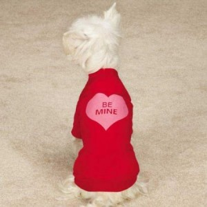 dog valentines day clothes