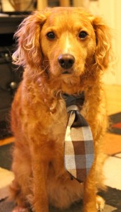 tie for dog