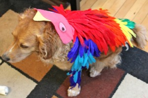 make a bird costume dog]