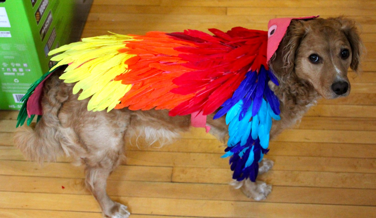 the birds halloween costume how to make