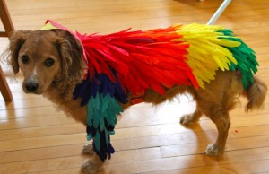 make a bird costume dog