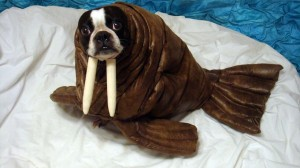 Homemade halloween costumes for large dogs