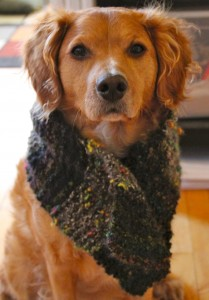 How To Knit A Neck Warmer Or Scarf For A Dog Needles And